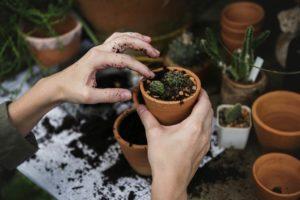 gardening southern california